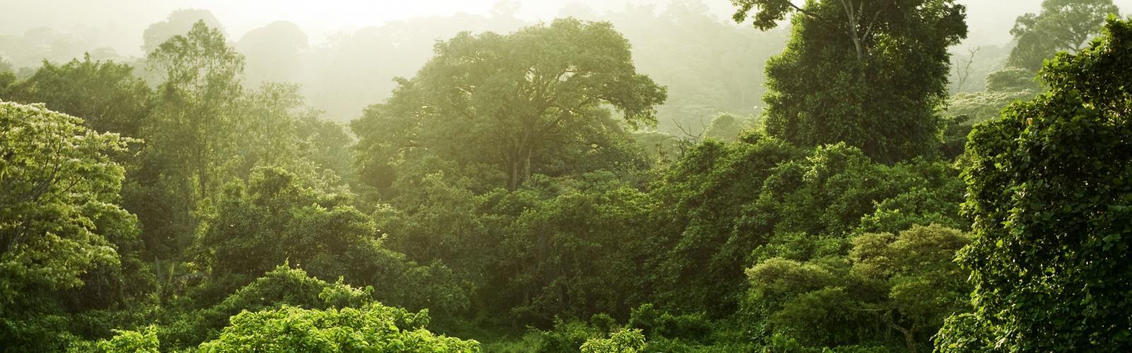 banner-coffee-and-tree-nursery