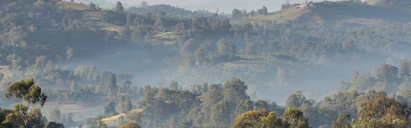 max-havelaar-ethiopia-landscape