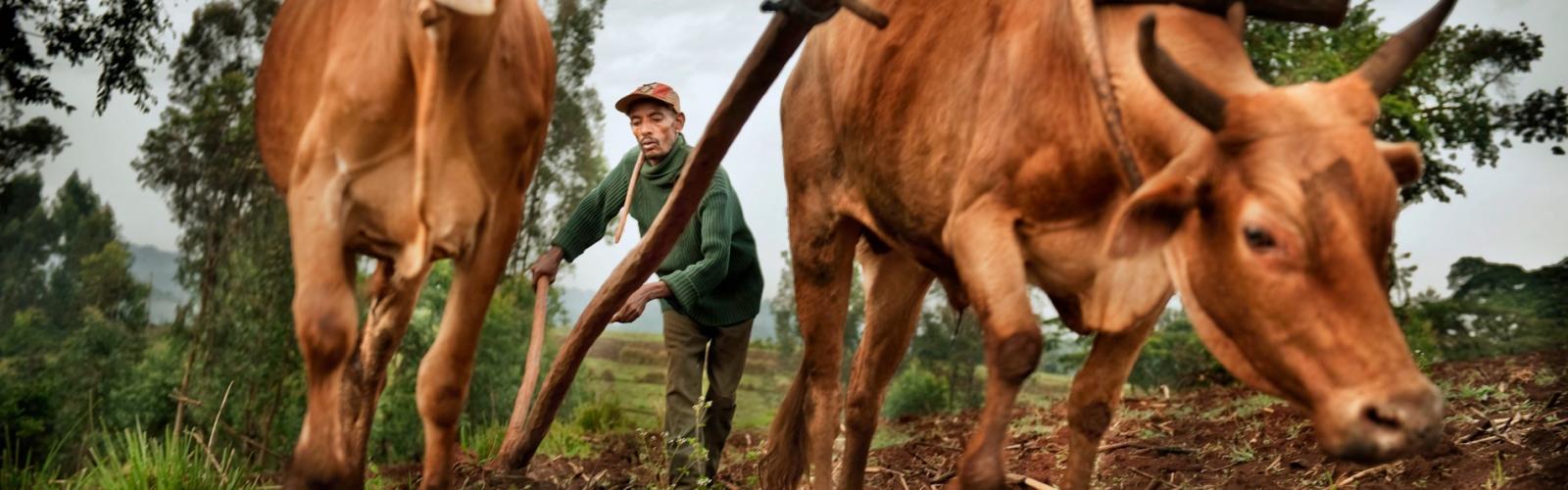 Coffee farmer in Ethiopia