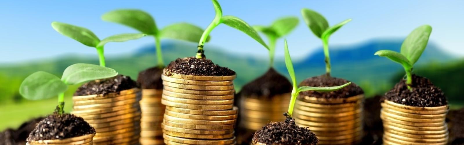 shutterstock_303871403-groene-groei