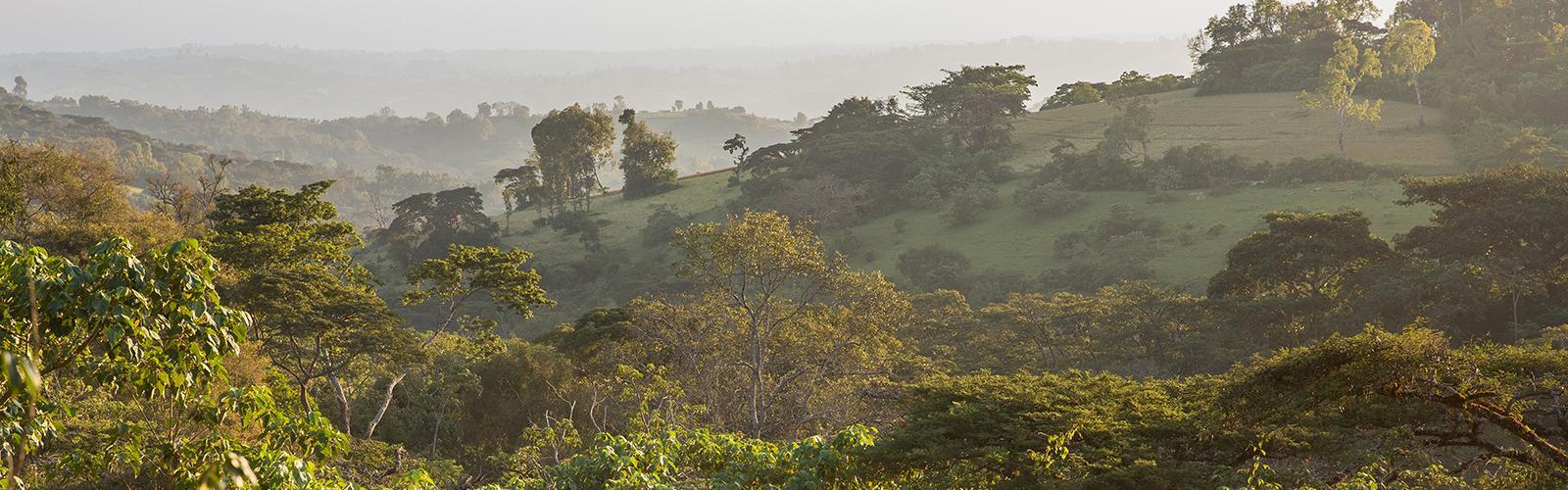 banner-ethiopie