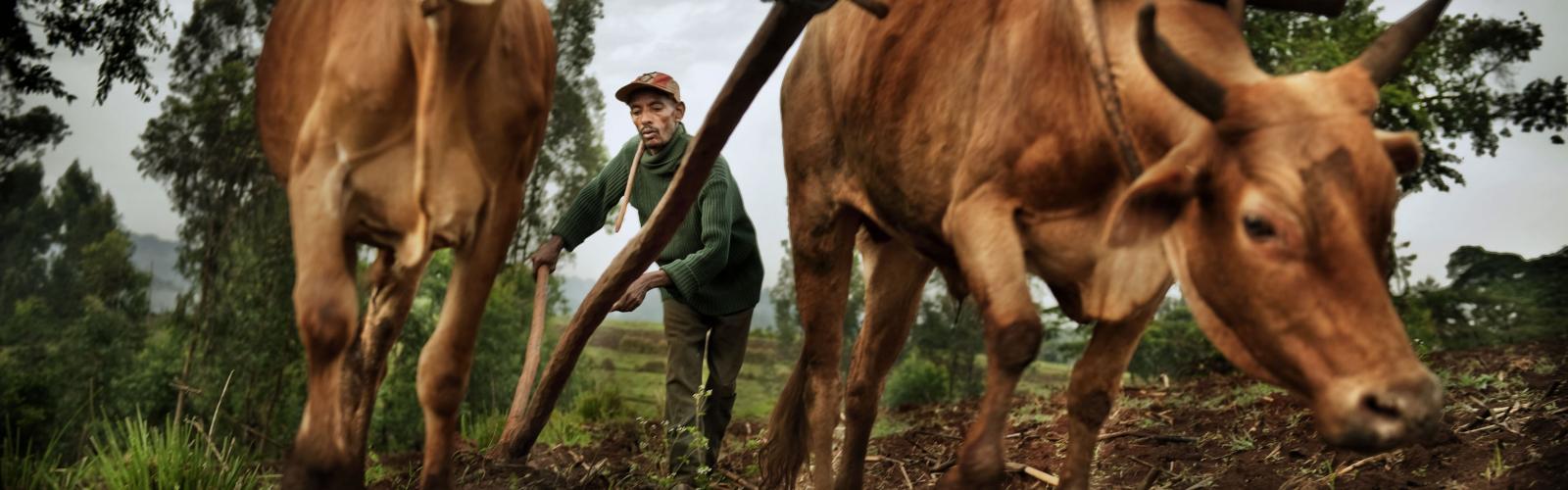 land-ploughing_yayu